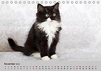Verspielte Ragdolls -Sanfte Katzen in seidigem Haarkleid (Tischkalender 2019 DIN A5 quer) - Produktdetailbild 11
