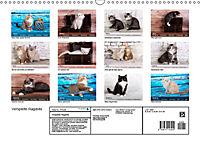Verspielte Ragdolls -Sanfte Katzen in seidigem Haarkleid (Wandkalender 2019 DIN A3 quer) - Produktdetailbild 13