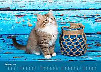 Verspielte Ragdolls -Sanfte Katzen in seidigem Haarkleid (Wandkalender 2019 DIN A3 quer) - Produktdetailbild 1