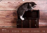 Verspielte Ragdolls -Sanfte Katzen in seidigem Haarkleid (Wandkalender 2019 DIN A3 quer) - Produktdetailbild 4