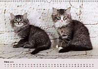 Verspielte Ragdolls -Sanfte Katzen in seidigem Haarkleid (Wandkalender 2019 DIN A3 quer) - Produktdetailbild 3