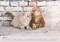 Verspielte Ragdolls -Sanfte Katzen in seidigem Haarkleid (Wandkalender 2019 DIN A3 quer) - Produktdetailbild 7