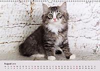 Verspielte Ragdolls -Sanfte Katzen in seidigem Haarkleid (Wandkalender 2019 DIN A3 quer) - Produktdetailbild 8