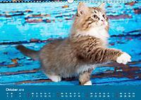 Verspielte Ragdolls -Sanfte Katzen in seidigem Haarkleid (Wandkalender 2019 DIN A3 quer) - Produktdetailbild 10