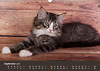 Verspielte Ragdolls -Sanfte Katzen in seidigem Haarkleid (Wandkalender 2019 DIN A3 quer) - Produktdetailbild 9