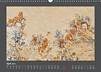 Versteinerte Miniaturwelten. Solnhofener Plattenkalk (Wandkalender 2019 DIN A3 quer) - Produktdetailbild 4