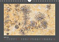 Versteinerte Miniaturwelten. Solnhofener Plattenkalk (Wandkalender 2019 DIN A4 quer) - Produktdetailbild 6