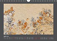 Versteinerte Miniaturwelten. Solnhofener Plattenkalk (Wandkalender 2019 DIN A4 quer) - Produktdetailbild 4