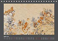 Versteinerte Miniaturwelten. Solnhofener Plattenkalk (Tischkalender 2019 DIN A5 quer) - Produktdetailbild 4