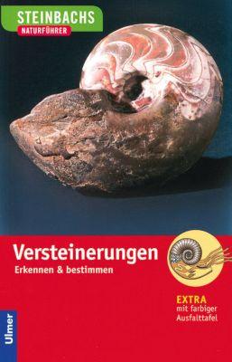 Versteinerungen, Gerhard Lichter