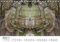 Verzauberte WälderAT-Version (Tischkalender 2019 DIN A5 quer) - Produktdetailbild 1