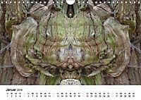 Verzauberte WälderAT-Version (Wandkalender 2019 DIN A4 quer) - Produktdetailbild 1