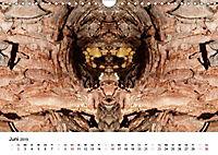 Verzauberte WälderAT-Version (Wandkalender 2019 DIN A4 quer) - Produktdetailbild 6