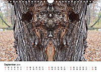 Verzauberte WälderAT-Version (Wandkalender 2019 DIN A4 quer) - Produktdetailbild 9