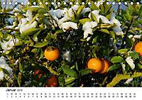 VITAMINE AUS DER NATUR (Tischkalender 2019 DIN A5 quer) - Produktdetailbild 1
