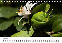 VITAMINE AUS DER NATUR (Tischkalender 2019 DIN A5 quer) - Produktdetailbild 4