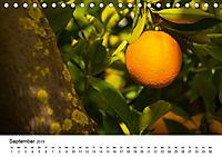 VITAMINE AUS DER NATUR (Tischkalender 2019 DIN A5 quer) - Produktdetailbild 9