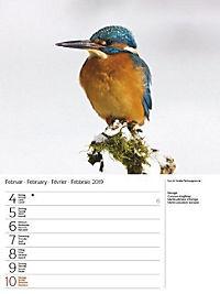 Vögel 2019 - Produktdetailbild 6