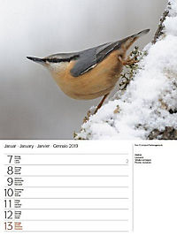 Vögel 2019 - Produktdetailbild 2