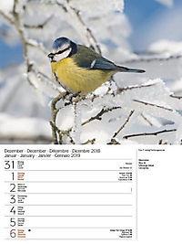 Vögel 2019 - Produktdetailbild 1