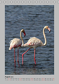 Vögel der Algarve 2019 (Tischkalender 2019 DIN A5 hoch) - Produktdetailbild 8