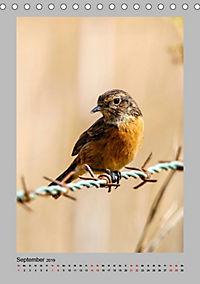 Vögel der Algarve 2019 (Tischkalender 2019 DIN A5 hoch) - Produktdetailbild 9