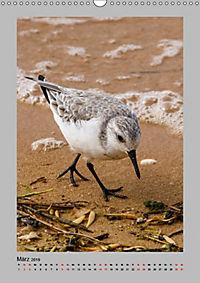 Vögel der Algarve 2019 (Wandkalender 2019 DIN A3 hoch) - Produktdetailbild 3