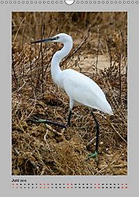 Vögel der Algarve 2019 (Wandkalender 2019 DIN A3 hoch) - Produktdetailbild 6