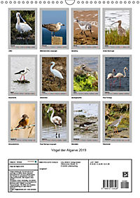 Vögel der Algarve 2019 (Wandkalender 2019 DIN A3 hoch) - Produktdetailbild 13