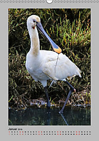 Vögel der Algarve 2019 (Wandkalender 2019 DIN A3 hoch) - Produktdetailbild 1