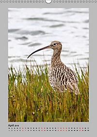 Vögel der Algarve 2019 (Wandkalender 2019 DIN A3 hoch) - Produktdetailbild 4