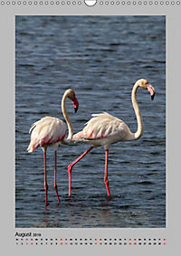 Vögel der Algarve 2019 (Wandkalender 2019 DIN A3 hoch) - Produktdetailbild 8