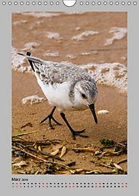 Vögel der Algarve 2019 (Wandkalender 2019 DIN A4 hoch) - Produktdetailbild 3