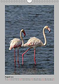 Vögel der Algarve 2019 (Wandkalender 2019 DIN A4 hoch) - Produktdetailbild 8