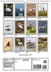 Vögel der Algarve 2019 (Wandkalender 2019 DIN A4 hoch) - Produktdetailbild 13