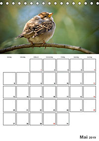 Vögel im heimischen Garten (Tischkalender 2019 DIN A5 hoch) - Produktdetailbild 5