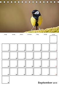 Vögel im heimischen Garten (Tischkalender 2019 DIN A5 hoch) - Produktdetailbild 9