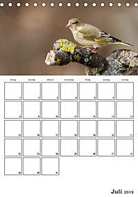 Vögel im heimischen Garten (Tischkalender 2019 DIN A5 hoch) - Produktdetailbild 7