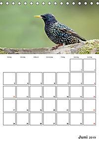 Vögel im heimischen Garten (Tischkalender 2019 DIN A5 hoch) - Produktdetailbild 6