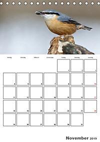 Vögel im heimischen Garten (Tischkalender 2019 DIN A5 hoch) - Produktdetailbild 11