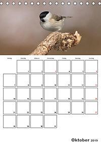 Vögel im heimischen Garten (Tischkalender 2019 DIN A5 hoch) - Produktdetailbild 10