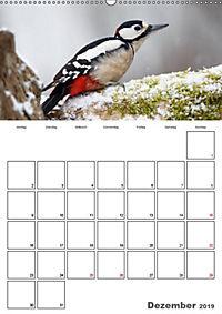 Vögel im heimischen Garten (Wandkalender 2019 DIN A2 hoch) - Produktdetailbild 6