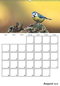 Vögel im heimischen Garten (Wandkalender 2019 DIN A2 hoch) - Produktdetailbild 12