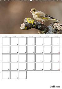 Vögel im heimischen Garten (Wandkalender 2019 DIN A2 hoch) - Produktdetailbild 10