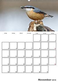 Vögel im heimischen Garten (Wandkalender 2019 DIN A2 hoch) - Produktdetailbild 13