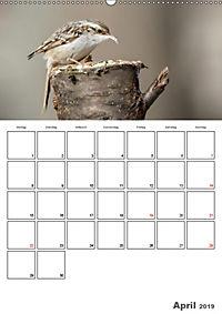 Vögel im heimischen Garten (Wandkalender 2019 DIN A2 hoch) - Produktdetailbild 4