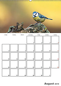 Vögel im heimischen Garten (Wandkalender 2019 DIN A2 hoch) - Produktdetailbild 8
