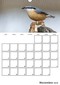 Vögel im heimischen Garten (Wandkalender 2019 DIN A3 hoch) - Produktdetailbild 11