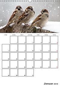 Vögel im heimischen Garten (Wandkalender 2019 DIN A3 hoch) - Produktdetailbild 1