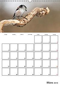 Vögel im heimischen Garten (Wandkalender 2019 DIN A3 hoch) - Produktdetailbild 3